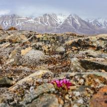 arctic hikes