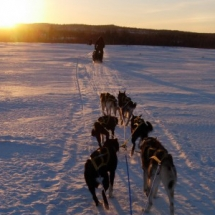 Husky sledding tours