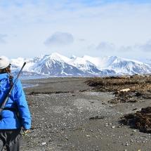 Walrus Colony Svalbard