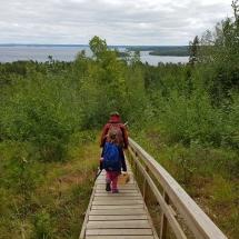 berry picking in Karelia