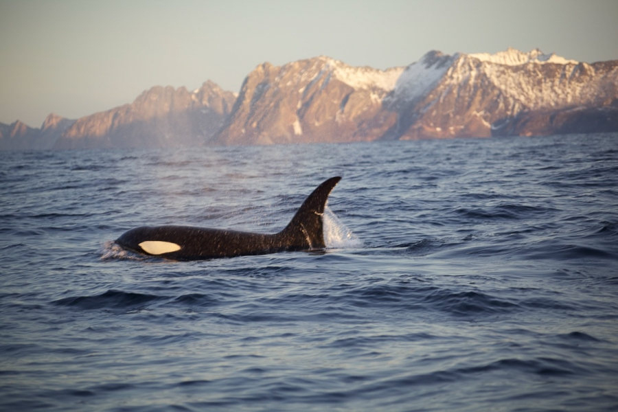 Northern Lights And Whale Watching Holiday On Senja Island