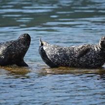 Local seals