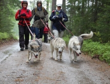 Bear watching and wildlife holiday vacation in Finland Husky Trekking