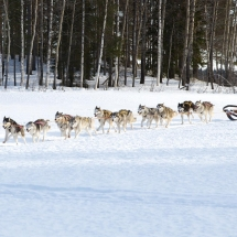 Dog Sledding Safari (Credit Graeme Richardson)