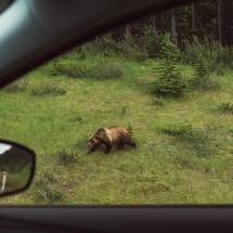 Wildlife of Banff national park