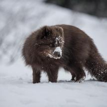 Credit: Tikki Geisler - Visist Greenland