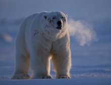 Luxury Spitsbergen