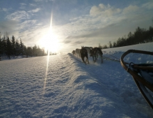 Life of a Dog Musher