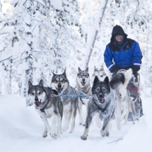 Drive your own Husky sledge