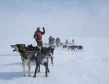 Husky Sledding Norway