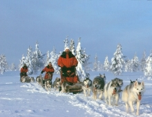 Join an unforgettable husky safari nearby to your cabin.
