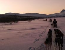 Sledding with the dogs (Photo: Jim Blackburn)
