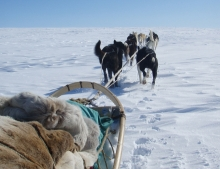 Husky sledding from Engholm Lodge five day tour